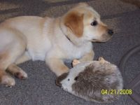 Lacey & Hedgie