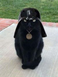Darth Vadercat