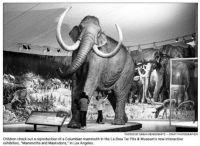 La Brea mammoth