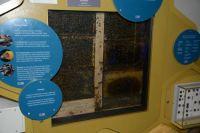 bees...Weston Park Museum, Sheffield