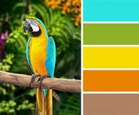Vibrant Macaw