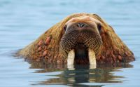 We have the Walrus, but no carpenter (Lewis Carroll)