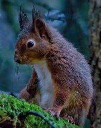 Cute Furry Squirrel in the Forest