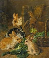 old world rabbits
