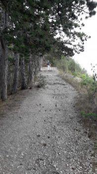 cesta nad Jenou