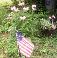 Flag & My Coneflowers