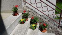 Muškáty a petrklíče / Geranium and primrose