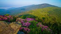 Roan Highlands spring
