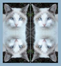 Purrsey-Feral Cat