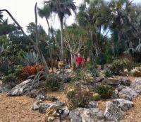 Selby Botanical Garden Dec 12, 2017