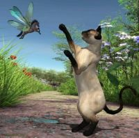 siamese-cat-and-horse-fly