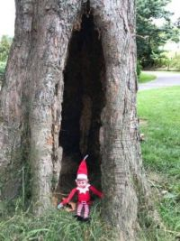Elfie Having a Great Time on Holiday