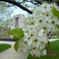 Trees at War Memorial Fountain, University of Notre Dame