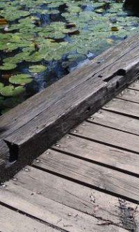 Lily Bridge