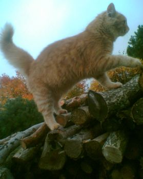 Max climbs the wood
