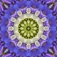 kaleidoscope 343 white and blue medium