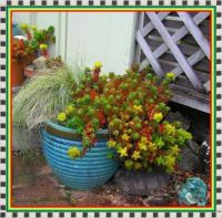 Jellybeans in a pot.