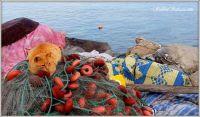 Seacat, Tunisia