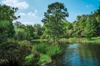 Japanese Garden, Maymont, July 2021