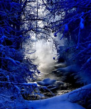 deep woods in winter