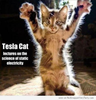 Tesla Cat