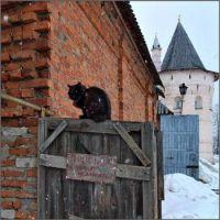 Cat on Snowy Gate