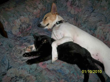 cat and dog hugs 005