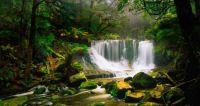 Australian rainforest