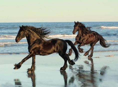 Black horses, blue sea