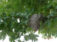 Buzz Nest