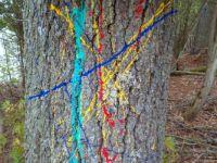 Tree grafitti