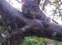 This tree is mine