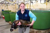 Huge Lobster caught in Maine 27 lbs