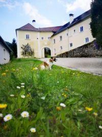 Kirchberg, Rakousko (3)