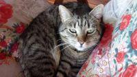 Mícinka / Our cat