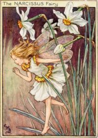 The Narcissus Fairy (smaller size)