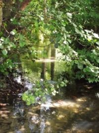 River in sunlight