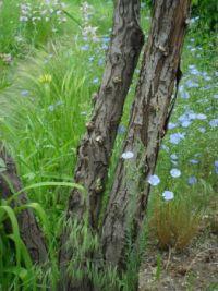 spring garden 003