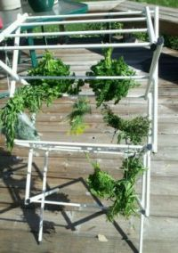 Great way to dry herbs