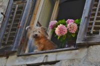 Cute dog in the window, photo by Paul Appleyard