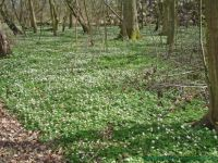 Early spring? - Bornholm