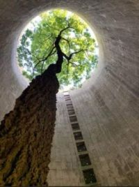 Tree growing in an abandoned silo. Nature will surely win