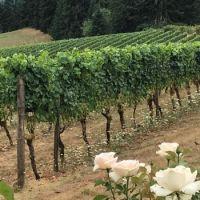 Sweet Cheeks winery II