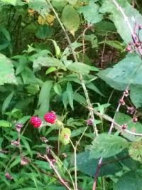 last berries--more challenging