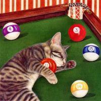 cat sleeping on pool table
