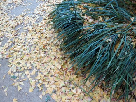 Bush and Ginkgo leaves