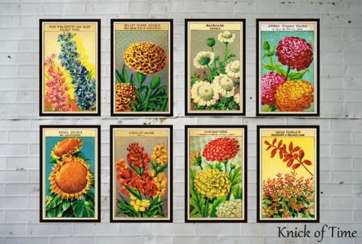 Seed packets framed