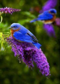 Mooi vogeltje
