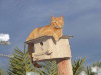 Yep, I'm guardian of the birdhouse. Magic.