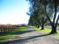 Napa Valley in the Autumn